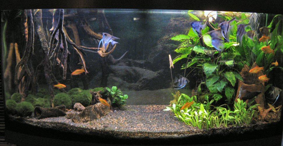 aquarien unsere mupfelfahrten. Black Bedroom Furniture Sets. Home Design Ideas